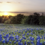 interior design, sunnyvale, Texas